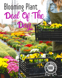 Blooming Plant Deal of the Day from Monrovia Floral in Monrovia, CA