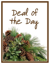 Deal of the Day Winter from Monrovia Floral in Monrovia, CA
