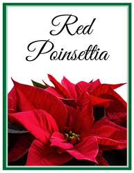 Red Poinsettia from Monrovia Floral in Monrovia, CA