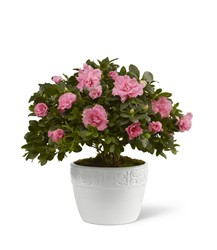 The FTD Vibrant Sympathy(tm) Planter from Monrovia Floral in Monrovia, CA