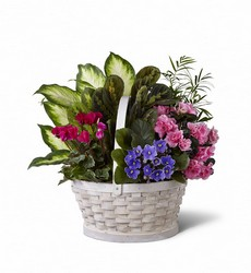 The FTD Peaceful Garden Planter from Monrovia Floral in Monrovia, CA