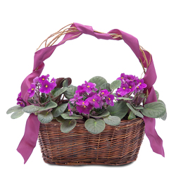 Very Violet Basket from Monrovia Floral in Monrovia, CA