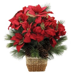 Natural Poinsettia from Monrovia Floral in Monrovia, CA