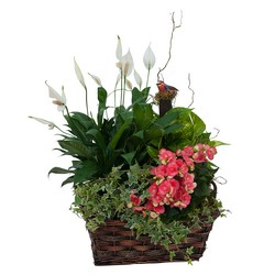 Living Blooming  Garden Basket  from Monrovia Floral in Monrovia, CA