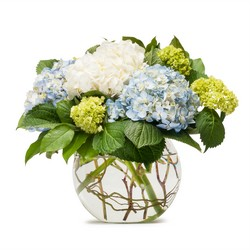 Mighty Hydrangea from Monrovia Floral in Monrovia, CA